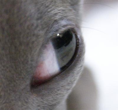 イタグレ小太郎の目