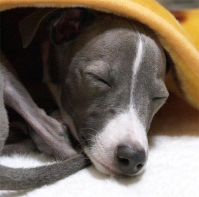 イタグレ小太郎の寝顔