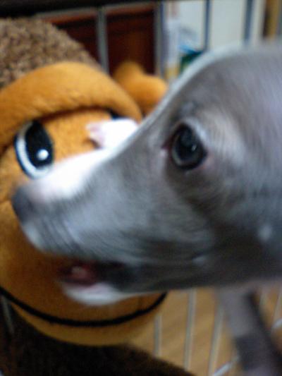 小太郎の生贄になったお猿さん。