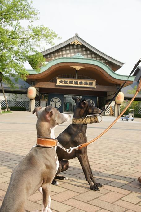 大江戸温泉に来たイタグレズ