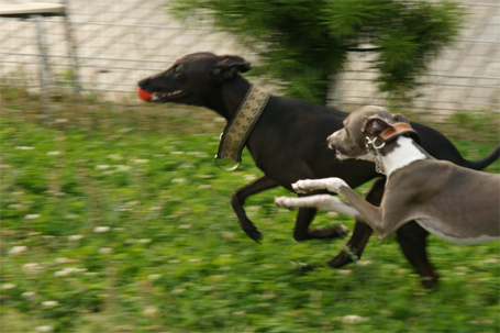 競馬の判定写真。フィードの勝ち☆