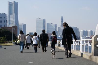 楽しそうにお散歩するイタグレ小太郎