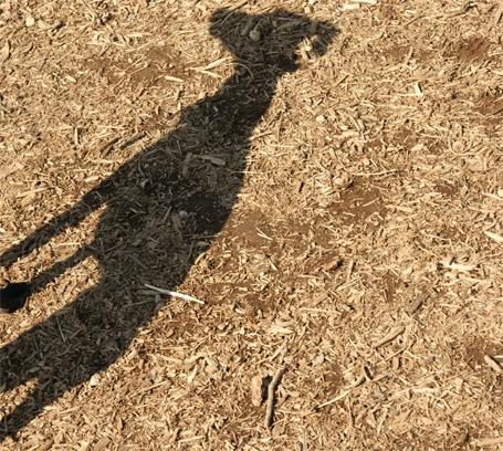 イタグレの影