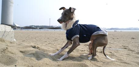 イタグレ小太郎始めての砂浜