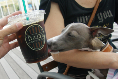 コーヒーが気になるイタグレ小太郎