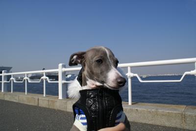 空と海とイタグレ小太郎