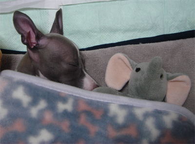 お気に入りの象さんと眠る小太郎
