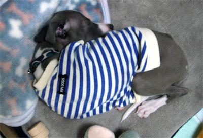 S字で眠る小太郎