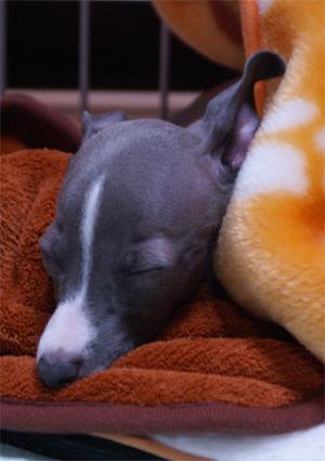 小太郎の寝顔