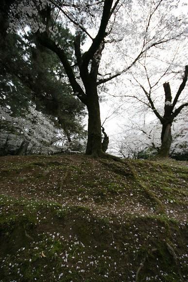 桜_01_04