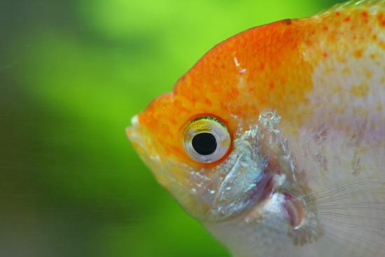 熱帯魚_01_01
