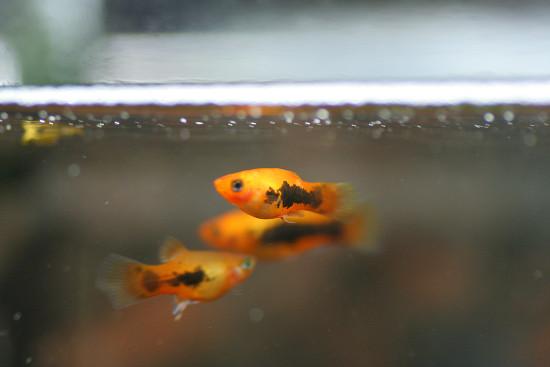 熱帯魚_01_04