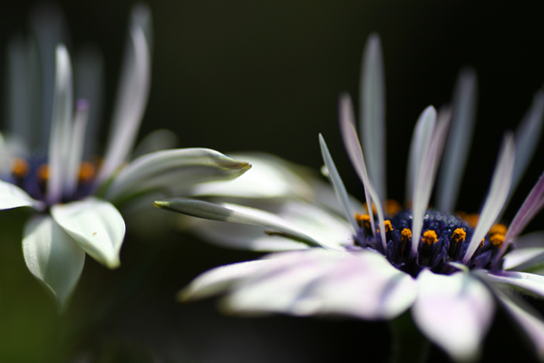 何の花?2