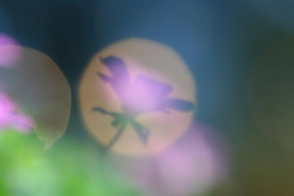 エロディウム・バリアビレ_02_02