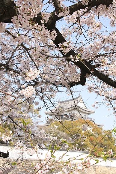 桜_03_1