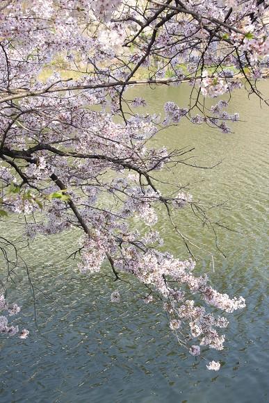 桜_03_2