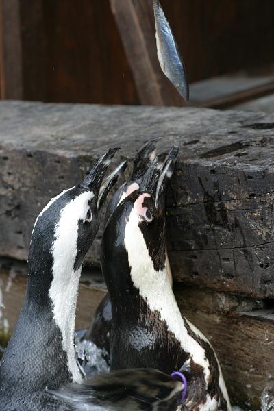 ペンギン_02_02