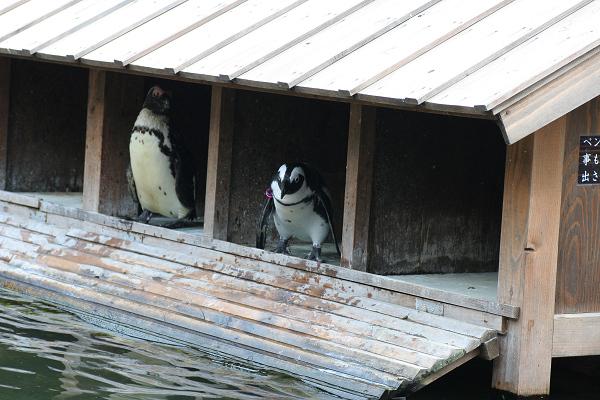 ペンギン_02_04