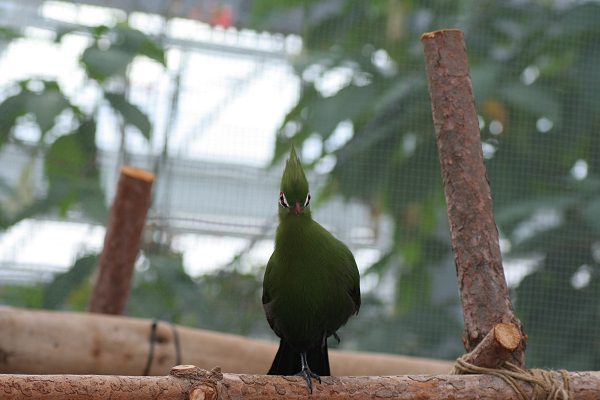 緑の鳥_01_01