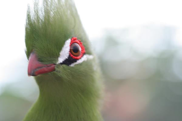 緑の鳥_01_02