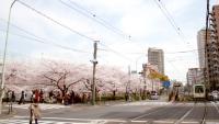 waseda_080413