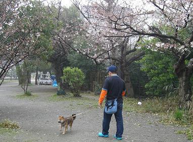 春のお散歩1