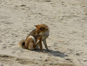 砂浜でリラックス。