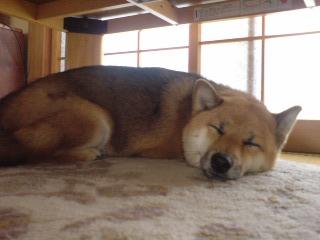 カーチャン、何騒いでんの? ゆっくり寝ようよ~。 気持ちいいよ。