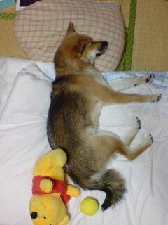 おやすみなさい zzz