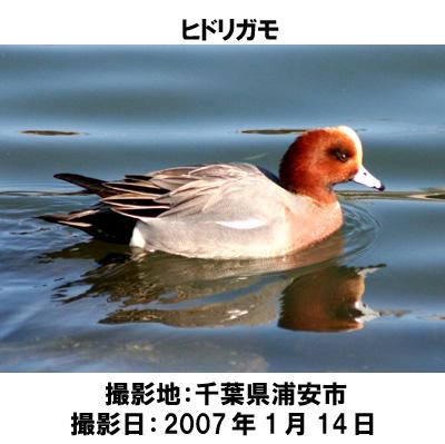 20070609104858.jpg