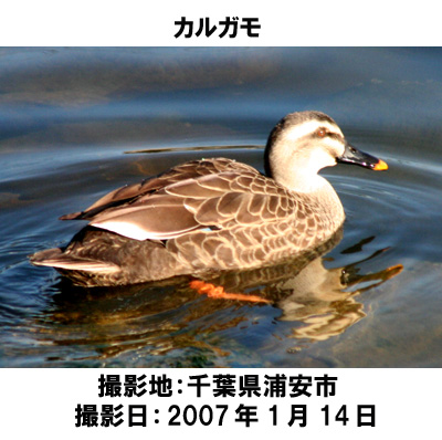 20070609111129.jpg