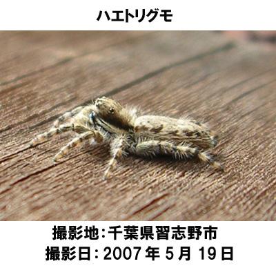 20070619144225.jpg