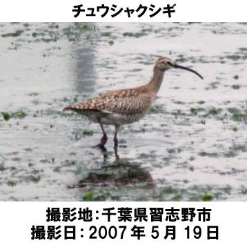 20070621093325.jpg