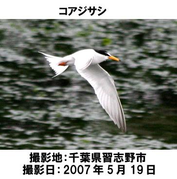 20070701081650.jpg