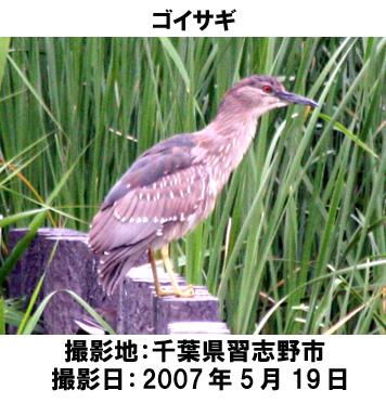 20070705103036.jpg