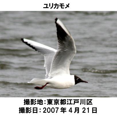 20070707112913.jpg