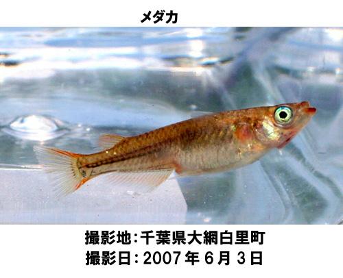 20070720153949.jpg