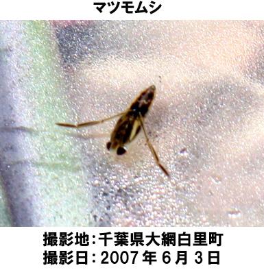 20070726104826.jpg