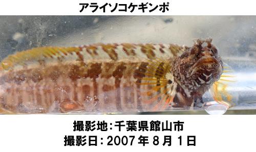 20070820104834.jpg