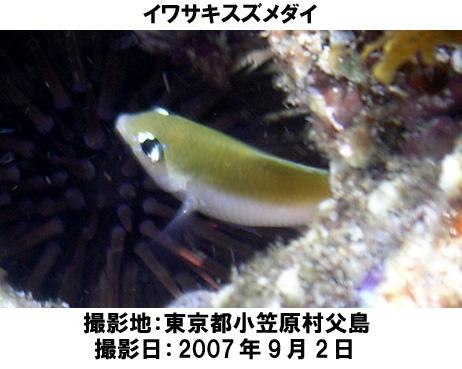 20071025210659.jpg