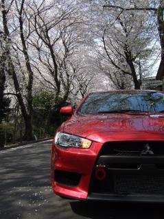 2008_0303桜0001_小