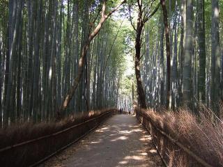 嵯峨野の竹林-2
