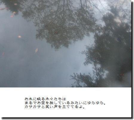 DSC_0386a_20081028023105.jpg