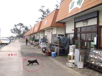 hatsushima003.jpg