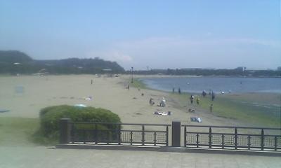 海の公園って海草だらけ