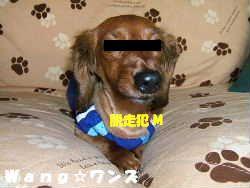 2006_06180010datu.jpg