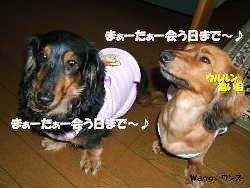 2006_07030015um.jpg