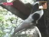 dogclimber.jpg