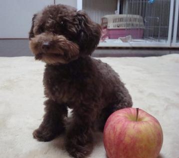 りんごすき?