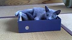 箱がすきです!